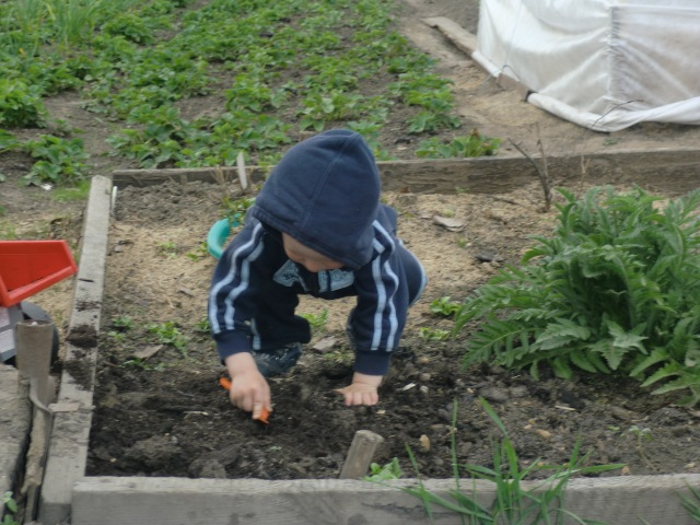Lukas digging potatoes